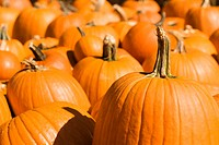 Group of pumpkins at produce market (thumbnail)