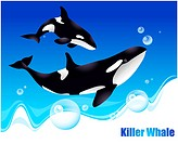 Fish, sea, underwater, undersea, ocean, killer whale (thumbnail)