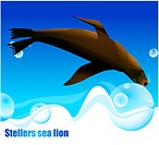 Stellers sea lion, sea, seafloor, nature, ocean, animal, background