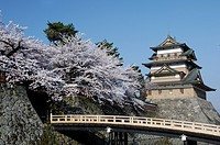 The Takashima Castle, A Bridge, And A Cherry Tree