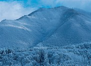Mountain And Forest In Winter