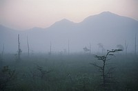 Senjogahara Meadows In The Morning Mist