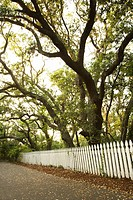 White picket fence with trees