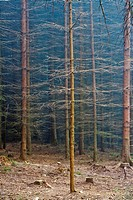 10851476, Czech Republic, Southern Bohemia, Forest
