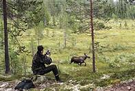 Man hunting forest Älgjakt där två älgar kommer framför skytt. Bildserie fyra bilder