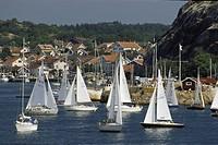sailboat in lake Många segelbåtar en sommardag vid Grebbestad