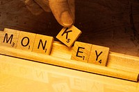 Close_up of a person´s hand picking up alphabet K from text Monkey made by wooden blocks