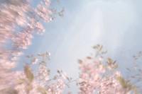Skära körsbärsträd i blom, närbild. Low Angle View Of Pink Cherry Trees In Blossom