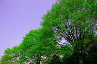 A Fresh Green Tree (thumbnail)