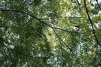 Branches And Leaves (thumbnail)