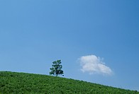 The Tree And Blue Sky On A Plateau (thumbnail)