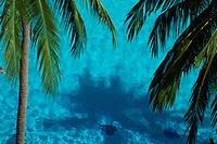 The Sea And Coconut (thumbnail)