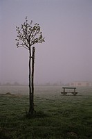 Fog, A Tree, And A Bench