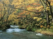 Oirase River In Japan