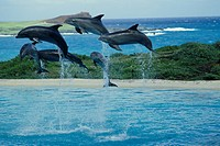 The Jump Of A Dolphin