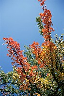 The Branch Of Autumn Leaves And Blue Sky