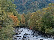 Tadami River With Autumn Colors