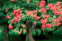 Flowers Of Crape Myrtle Tree