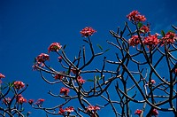 Flower Branches Against Sky