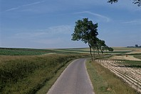 A Path And Rural Landscape In France