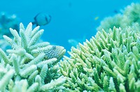 Coral And Fish (thumbnail)