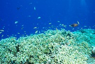 Coral And Tropical Fish (thumbnail)
