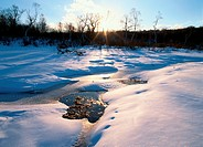 Snowy Marsh In Evening