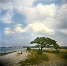 Scenics Ett ensamt grönskande träd står på en strand och ovan en blå himmel med stora vita moln.