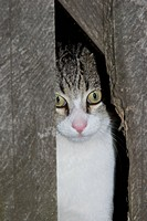 Cat watching between a fence