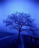Träd i blått dis, vid väg. Trees In Blue Haze By Road