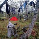 Fjällvandring och camping i Sareks nationalpark, lappland. Kläder hänger på träd, person i bakgrunden. Hiking And Camping In National Park Of Sarek, L...