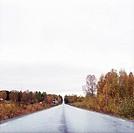 ARKIV 061010 _ Raksträcka På En Landsväg I Höstfärger, Värmland, Sverige. Foto: Maria Annas Kod 76106 COPYRIGHT SCANPIX, Road By Autumn Tree