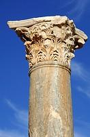 Column with Corinthian capital Leptis Magna Libya