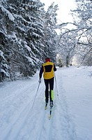 Cross-country skier in snow covered forest Perlacher Forst Munich Germany MR