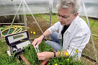 Pollution research. Researcher monitoring the impact of ozone on grassland plants´ stomatal conductance and respiration using a porometer. Stomata are...