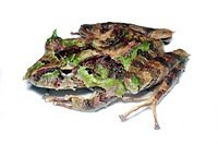 Treefrog Eleutherodactylus sp. showing cryptic camouflage colouration. Eleutherdactylus is typically thought of as the largest vertebrate genus on Ear...