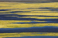 ALGAE GROWTH on Lake. Klamath NWR. California. USA