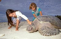 GREEN TURTLE Chelonia mydas observed by children as it returns to the sea after laying eggs. Australia