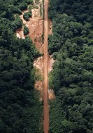 HABITAT DESTRUCTION. Road through primary forest. French Guiana