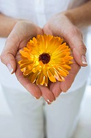 Close up of woman&#198;s hands cupping flower