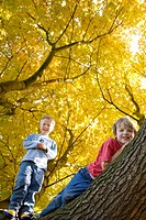 Boys climbing tree with autumn leaves