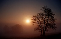 Tree at sunrise in morning haze, Baden-Wurttemberg, Germany