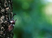 Beetle On A Tree