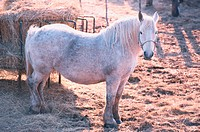 Pony Near Hay
