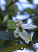 Flower, Águas de São Pedro, São Paulo, Brazil