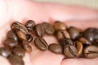 Coffee beans on a palm