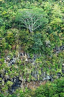 Primitive vegetation near the Chamarel waterfalls, Mauritius