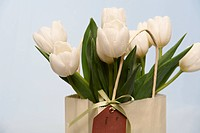 Tulips in Gift Bag