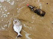 Dead stranded fish and a bottle on the beach