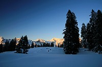 Deeply snowed firs, ski slopes Sellamatt - Wildhaus with Saentis mountain, Toggenburg, St. Gall, Switzerland